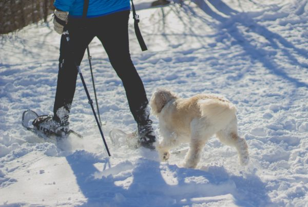 cedar valley winter date ideas with significant other and dog or puppy